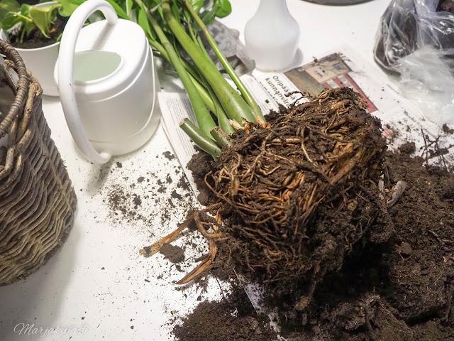 boheemi orthex ruukku kierrätys sisustus mullanvaihto altakastelu kestokastelu