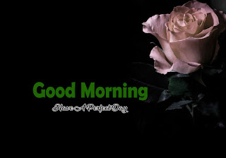 New Good Morning 4k Full HD Images Download For Daily%2B51