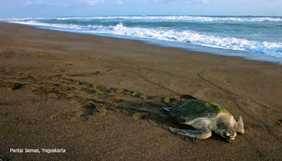 Samas beach