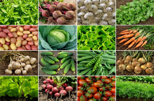List Of Vegetables Names In English With Pictures Filipino