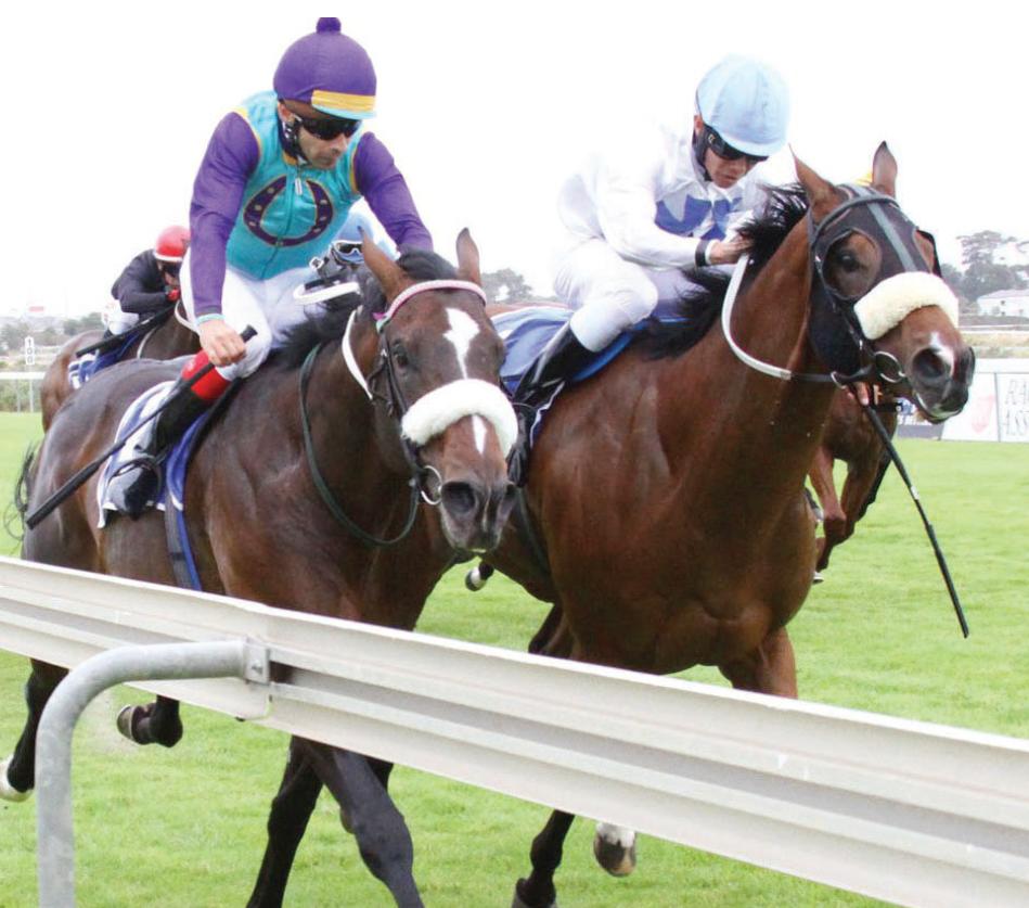 Kampala Campari - Horse Racing