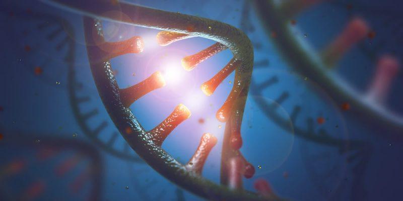 الحمض النووي الريبي