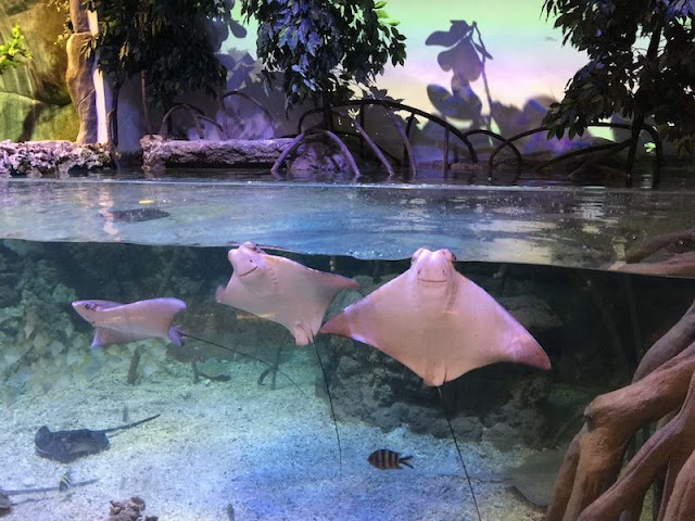 Alamat Jakarta Aquarium