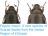 http://sciencythoughts.blogspot.co.uk/2017/09/pegylis-majori-new-species-of-scarab.html