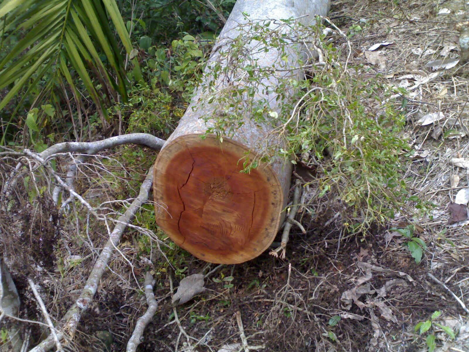 Hutan Lindung Tormatutung di Kabupaten Asahan berubah Fungsi