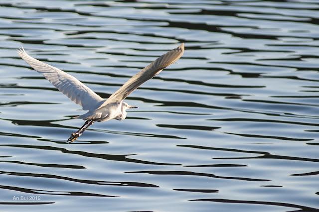 Chim bay trên hồ
