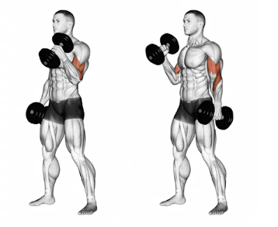 Hammer curl for biceps exercise