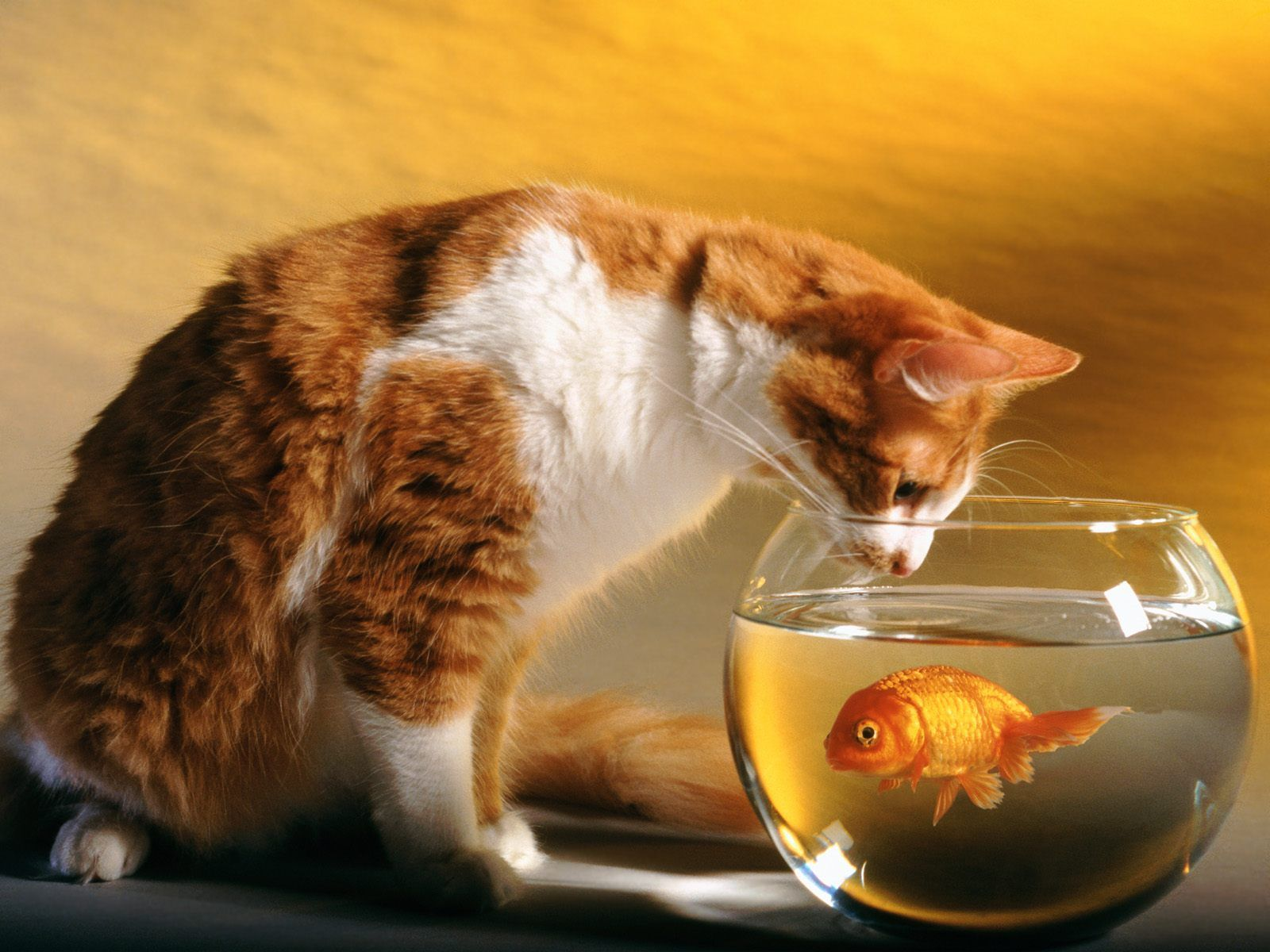 All Wallpapers: Funny Cats Hd Wallpapers