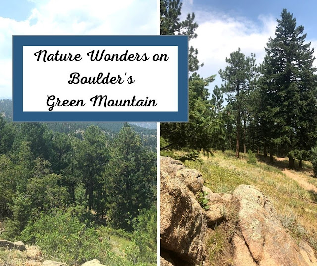 Bristles of evergreens, nature's boulder creations, sparse brilliant blooms, sweeping views of surrounding mountains and valleys wonder at Boulder's Green Mountain