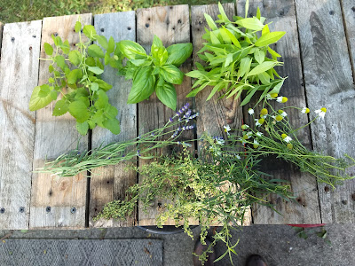 Cut herb examples on table