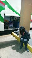 Menor é apreendida pela Guarda Municipal de Dourados (MS) com droga dentro de caixas de erva para tereré