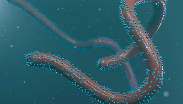 A következő járvány: Marburg? Az Ebola halálos unokatestvére.