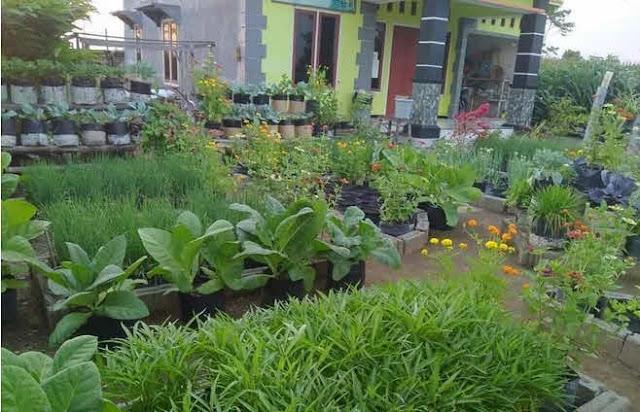 tanaman bunga rumah minimalis