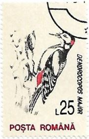 Selo Pica-pau-malhado-grande