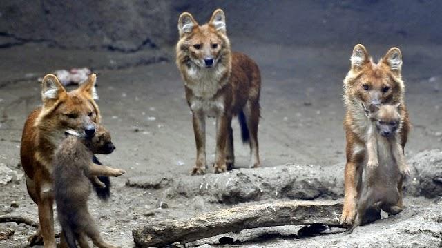 Már négyezren mehetnek naponta a Fővárosi Állatkertbe