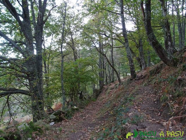 Bosque camino a Campiellos