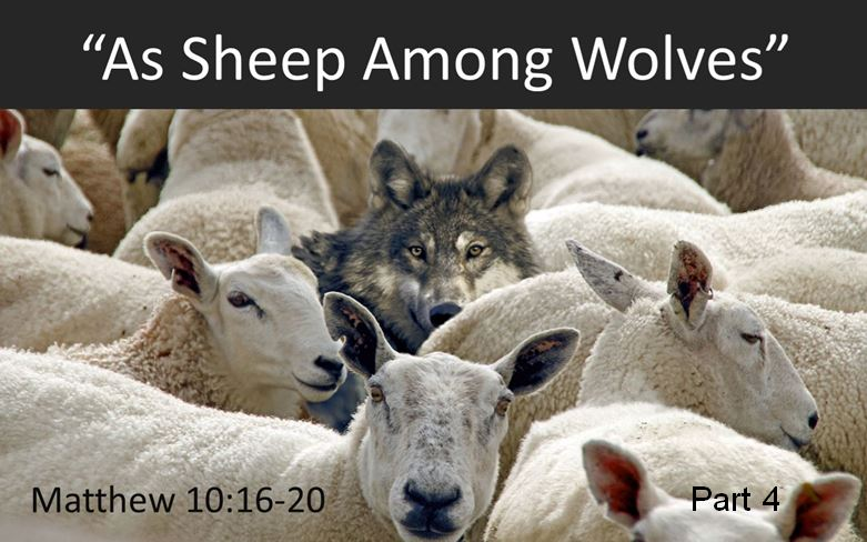 Pastor Chris' Blog: As Sheep Among Wolves, part 4