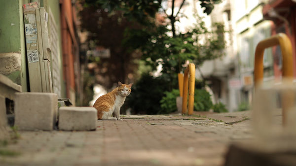 documentary cats in istanbul