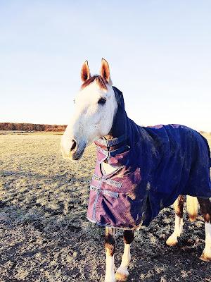 Team Tunnah Equestrian Autumn & Winter Horse Care Tips