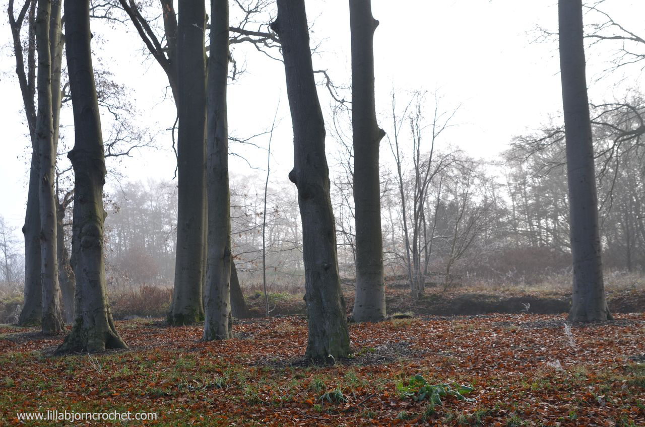 Autumn in the North of Holland