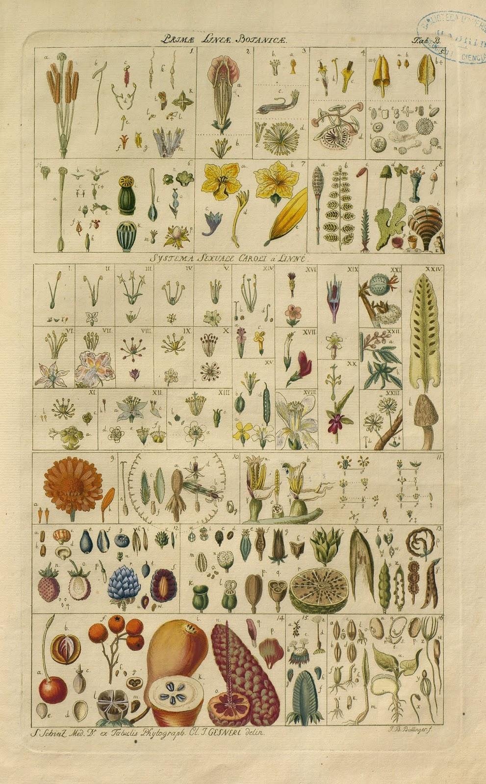 Cartel dibujos botánica reino vegetal colección Van Berkhey