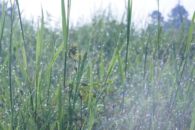Ketika rumput dan Embun pagi ciptakan harmoni
