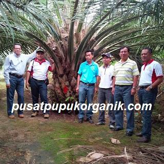 pengadaan pupuk organik power nutrition untuk kelapa sawit