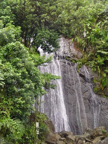 Water Fall in El Yunque