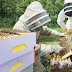 Εθνικό ηλεκτρονικό μελισσοκομικό μητρώο – Ατομική μελισσοκομική ταυτότητα