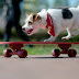 Pet-Link: Η πιο καινοτόμα εφαρμογή για τα αδέσποτα