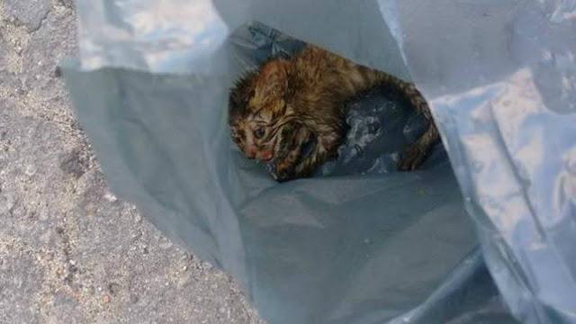 Чудо из пакета: выброшенного на дорогу котёнка приютила много-котная семья…
