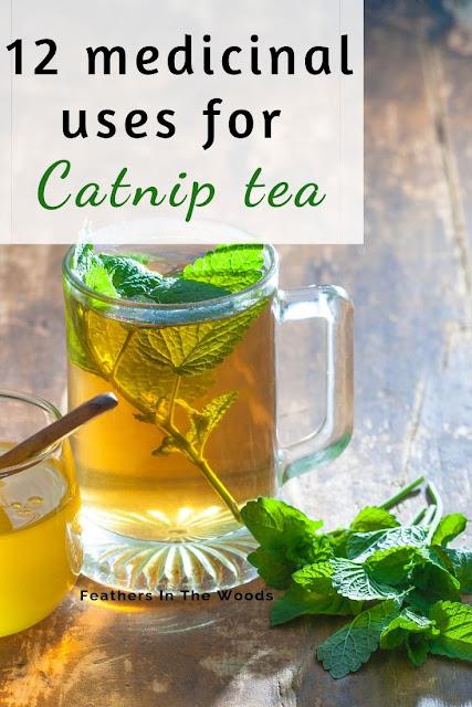 catnip tea. growing, brewing and using