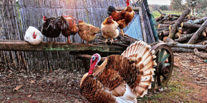 Πρώτο περιστατικό ανθρώπινης μόλυνσης με την γρίπη των πτηνών AH5N8.