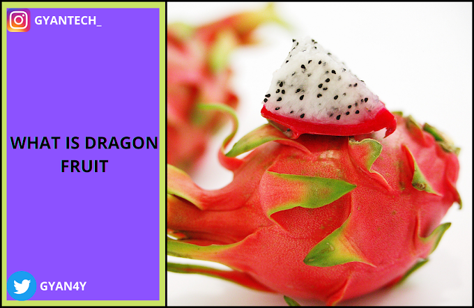 ड्रैगन फ्रूट (पितया )फल खाने के फायदे । Dragon Fruit Benefits