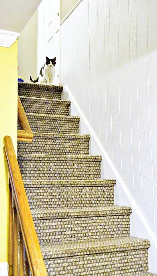 carpeted stairs with a cat at the top