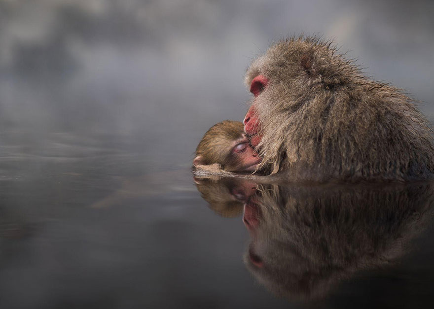 These Are The 35 Best Pictures Of 2016 National Geographic Traveler Photo Contest - Family Ties, Japan