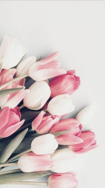 صور خلفيات ورد للايفون زنبق