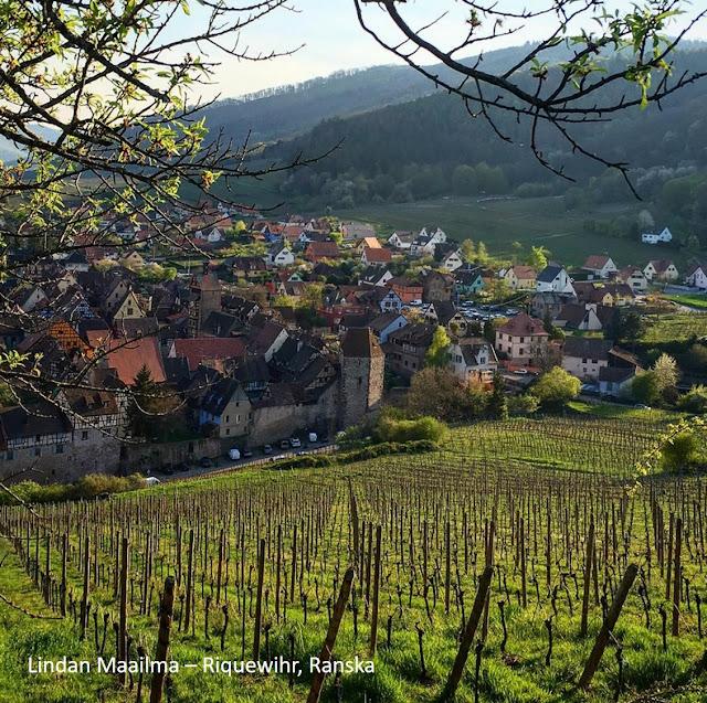 Alsacen viinireitti Riquewihr Ranska viinitarha
