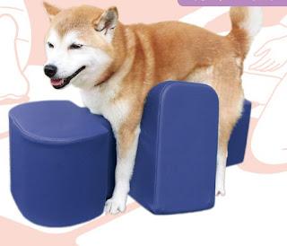 cães com lesão de movimento
