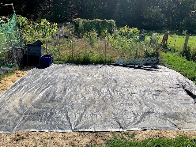 A large square black tarp anchored to the ground in front of a fenced-in area full of 2ft-4ft tall weeds.