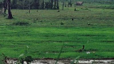 Gandeng Milenial, Pemko Pariaman Garap 338 Hektar Lahan Tidur