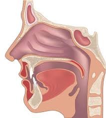 Treatment Options for Obstructive Sleep Apnea   Comparison between Mouthpiece and CPAP