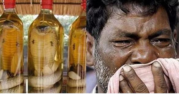 Wow! Laki-Laki Ini Merendam Ular Kobra Di Dalam Alkohol Sebulan Lalu Beliau Membuka Botolnya Dan Kejadian Mengerikan Terjadi...