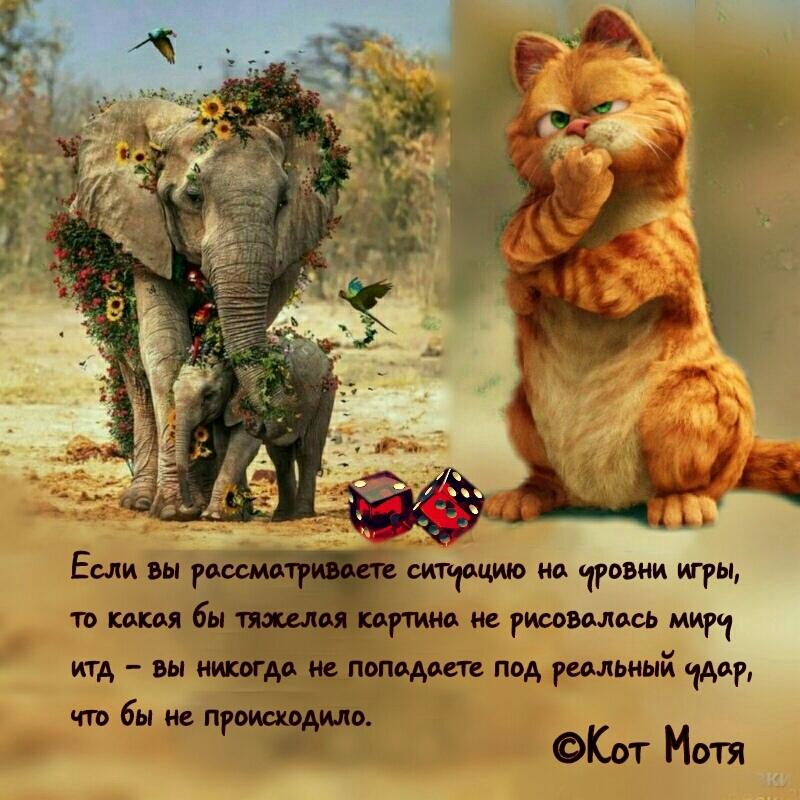 Блог Кота Моти  - Страница 4 Ig8mmGToF5E