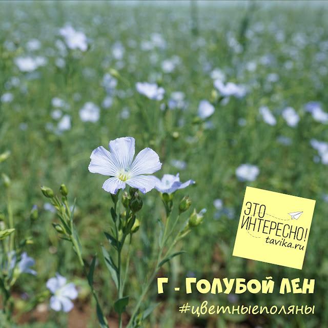 поле льна, Крым
