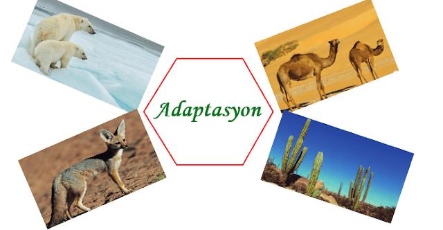 Adaptasyon, Doğal Seçilim ve Varyasyon