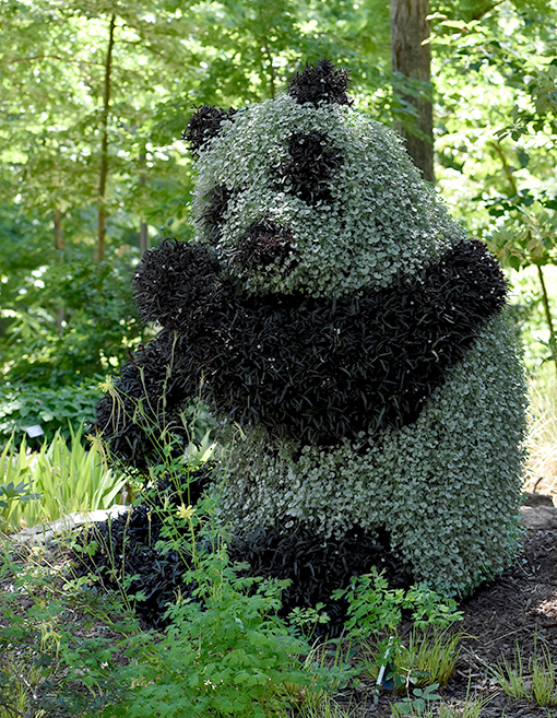 Panda | Atlanta Botanical Garden Gainesville | Photo: Travis Swann Taylor