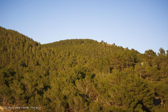 Paisaje Pinos - Ibiza por El Guisante Verde Project