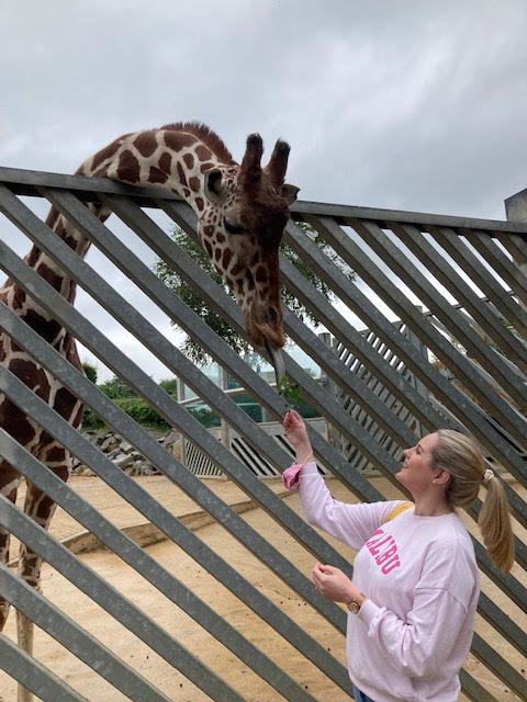 Girl feeding a giraffe branches