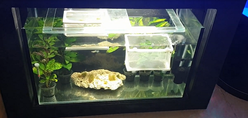 Install LED lights in tank